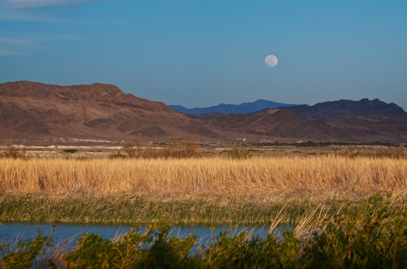 The moonrise over Mt. Charleston in the background and Peterson Pond in the foreground.