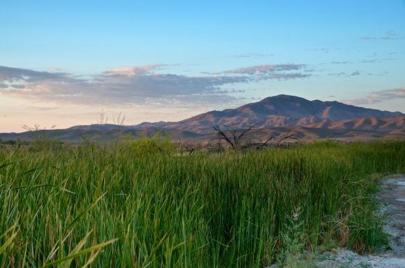 Dawn at Big Springs, Ash Meadows National Wildlife Refuge